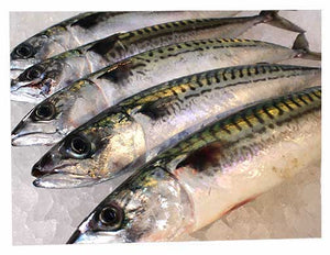 Fresh Line Caught Mackerel ( 1kg )