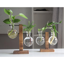 Load image into Gallery viewer, thefancyplace - hydroponic industrial hanging plant stand glass planter planter