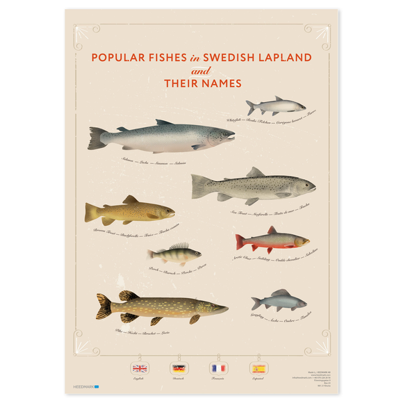 Poster Lapland's most popular fishes English, Deutsch, French & Spanish