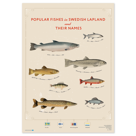 Poster Lapland's most popular fishes - lokala språk