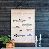Poster Swedish Lapland's most popular fishes på svenska, meänkieli, samiska