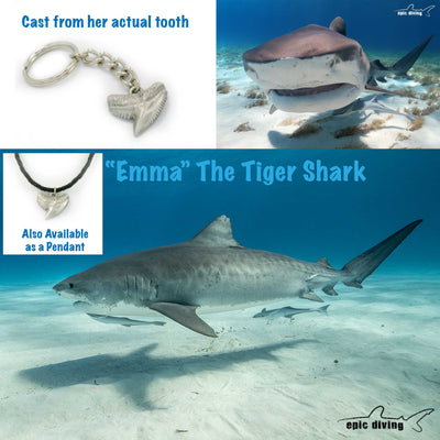 "Realistic Ocean Theme Sea Life Tiger Shark Tooth ""Emma""  Quailty Pewter Key Chain, Jewelry, Big Blue, [Big_Blue_By_Roland_St_John]"