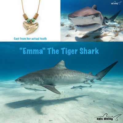 "Ocean Theme Shoreline Bronze Realistic Ocean Theme Sea Life Shark Tooth ""Emma"" Pendant Necklace, Jewelry, Big Blue, [Big_Blue_By_Roland_St_John]"