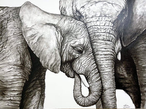Animal Series- Elephants