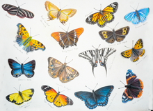 Load image into Gallery viewer, Butterflies 1-15