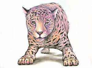 "Pink Jaguar 36"" x 48"" - original"