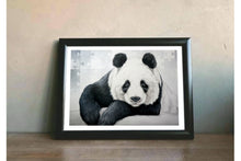 Load image into Gallery viewer, -Panda