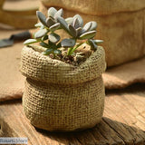 Linen Bag Shaped Ceramic Flower Pots. - 01 - Linen Bag Shaped Ceramic Flower Pots.