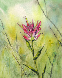 Indian Paintbrush with Branches