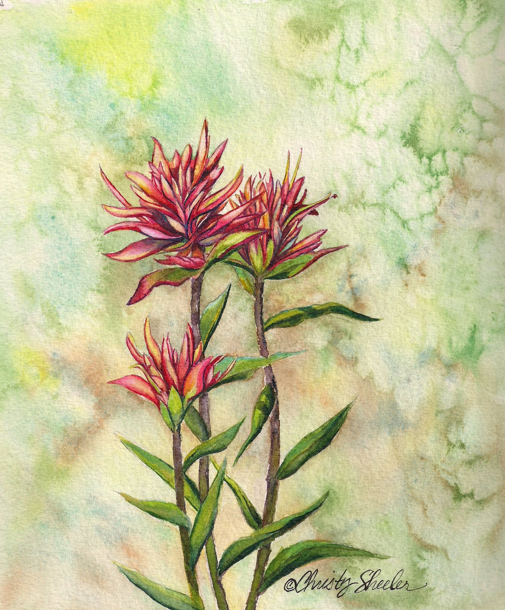 Indian Paintbrush Group of Three