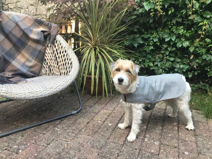 Dog Coat- Glen Check
