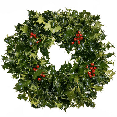"DIY Real Christmas Holly Wreath (12"", 30cm) - Christmas Trees Direct"