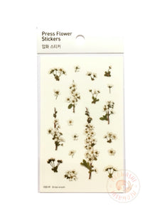 Appree pressed flower sticker - Bridal wreath APS-010