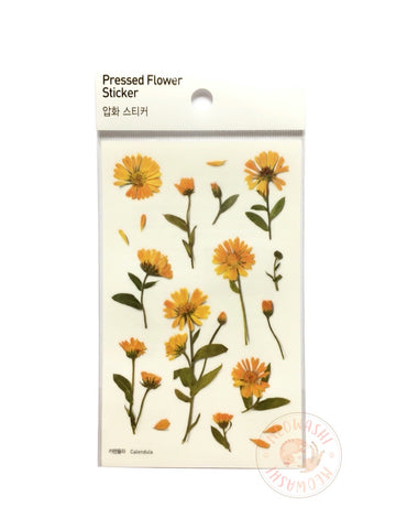 Appree pressed flower sticker - Calendula APS-014