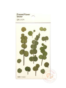 Appree pressed flower sticker - Eucalyptus APS-002