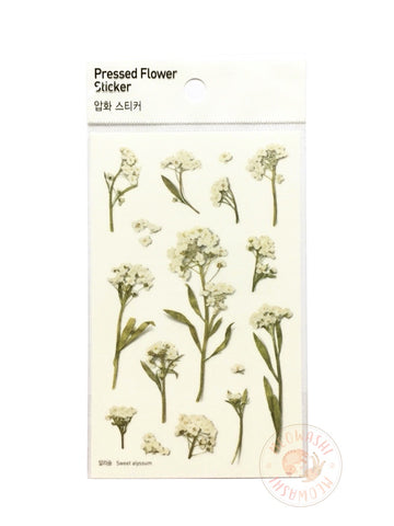 Appree pressed flower sticker - Sweet Alyssum APS-016