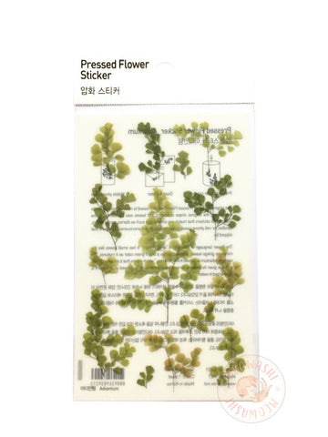 Appree pressed flower sticker - Adiantum APS-021