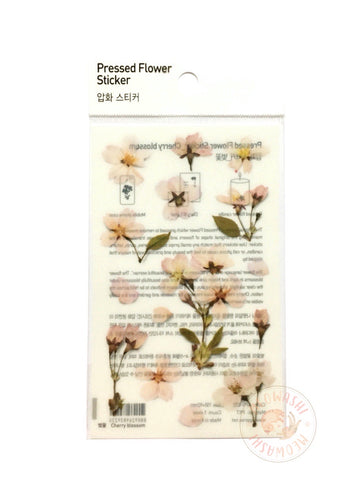 Appree pressed flower sticker - Cherry blossom APS-022