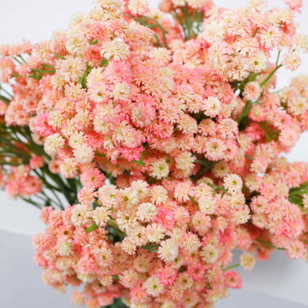Baby Breath Bouquet Premium - Light Pink (60cm) Close