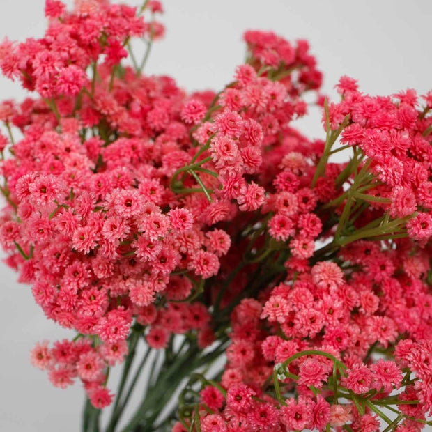Baby Breath Bouquet Premium - Fuchsia (60cm)