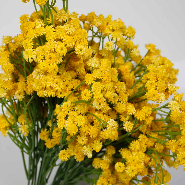 Baby Breath Bouquet Premium - Yellow (60cm) Close