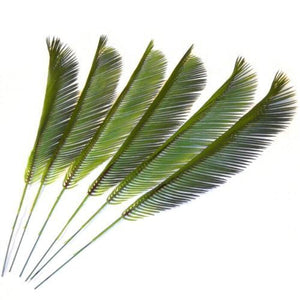 6 x Artificial Cycas Palm Leaves - Easter - 41cm - Palm Sunday - Plastic Palms