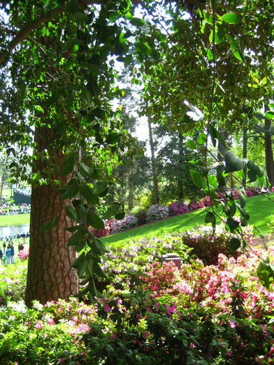 Views at Augusta National Golf Course Photographic Print