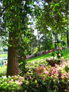 Beautiful greenery and flora at Augusta national golf course