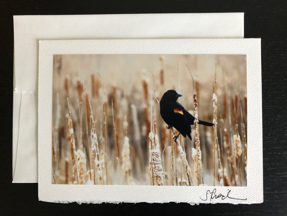 Red-winged Blackbird in a Field of Cattails