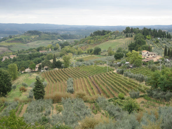 the rolling hills, cypress trees and vineyards in the tuscany region of italy