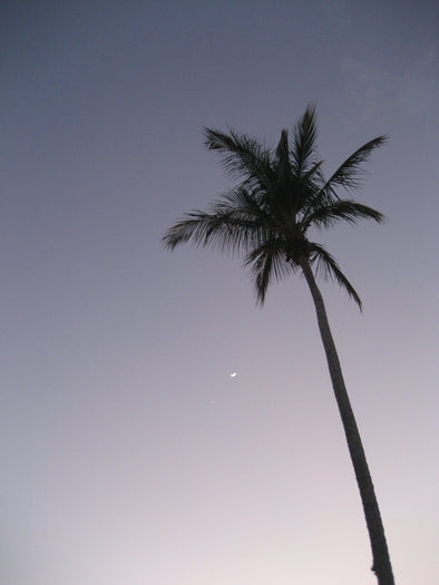 a palm tree in the setting sun with crescent moon in sight