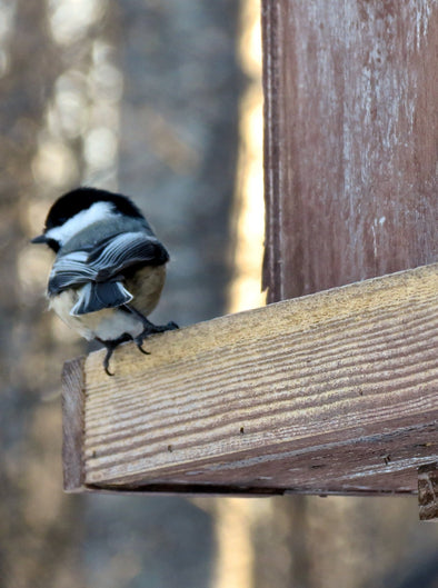 chickadee on the ledge of a wooden bird feeder