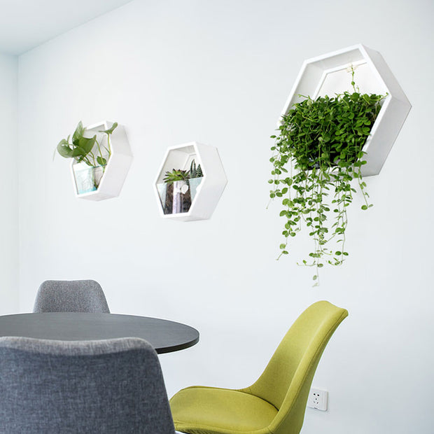 AirHex Wall Planter
