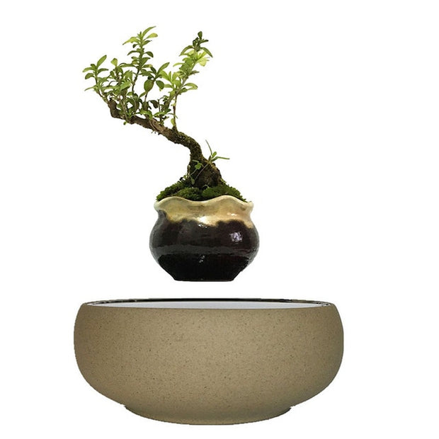 Floating Plant