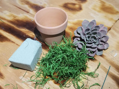 Succulent Plant Craft Kit