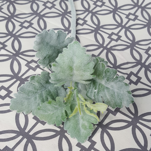 Faux Dusty Miller