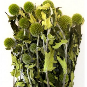 Thistle -Green-