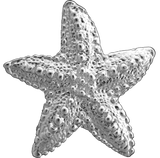 Tropical Seas® Jewelry Collection Sterling Silver Starfish Pendant