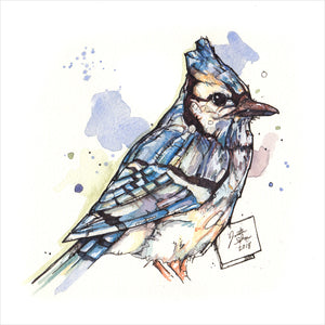 """Bluejay"" - Original 8x10 Illustration (SOLD)"