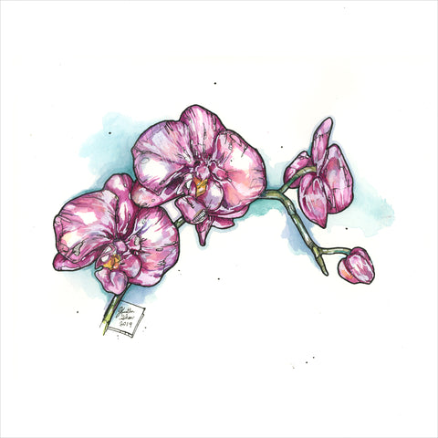 """Orchids"" - Original 8x10 Illustration"