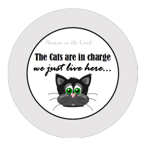 "604.  The cats are in charge ""VINYL"" image"