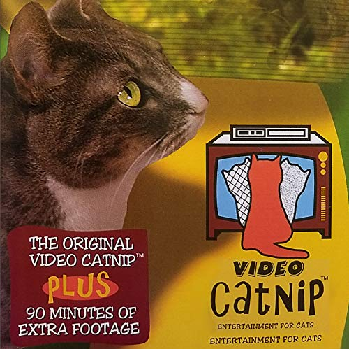 Video Catnip