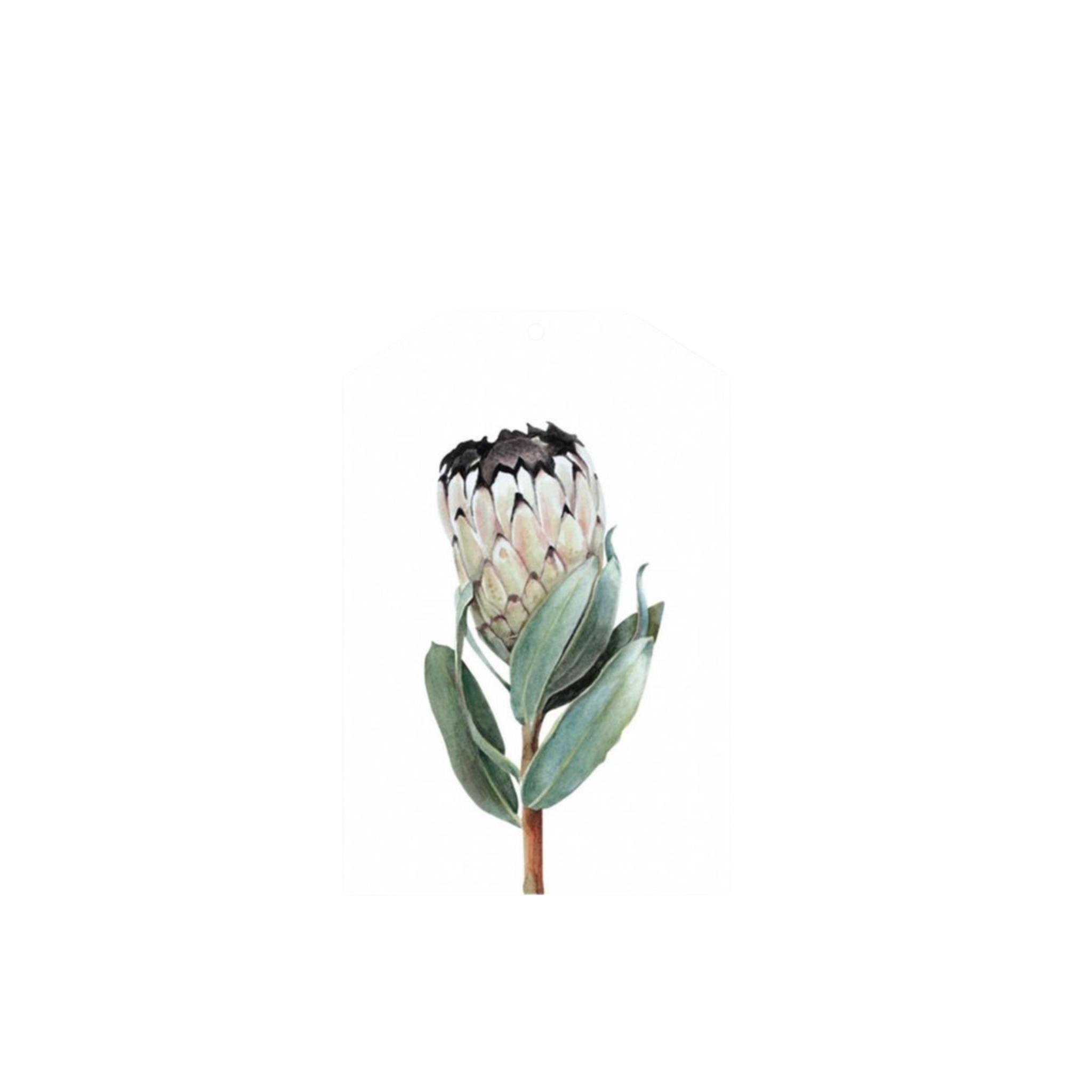 Father Rabbit Protea Gift Tag
