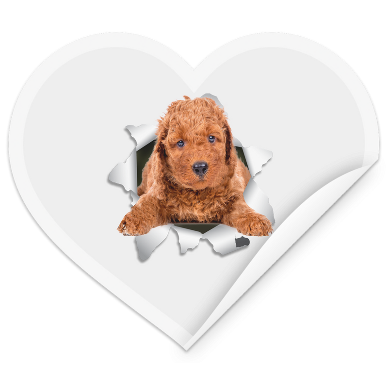 POODLE 3D Heart Sticker