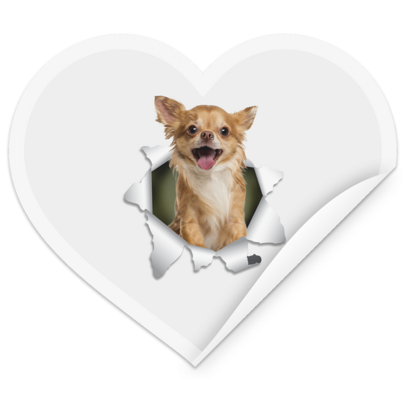 CHIHUAHUA 3D Heart Sticker