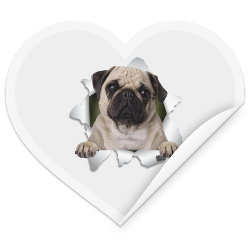 PUG 3D Heart Sticker