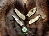 Hiddenite (Green Kunzite) large rough crystal 1.4-1.5 inches