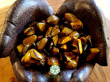 Tiger Eye small tumbled crystal .75 inch