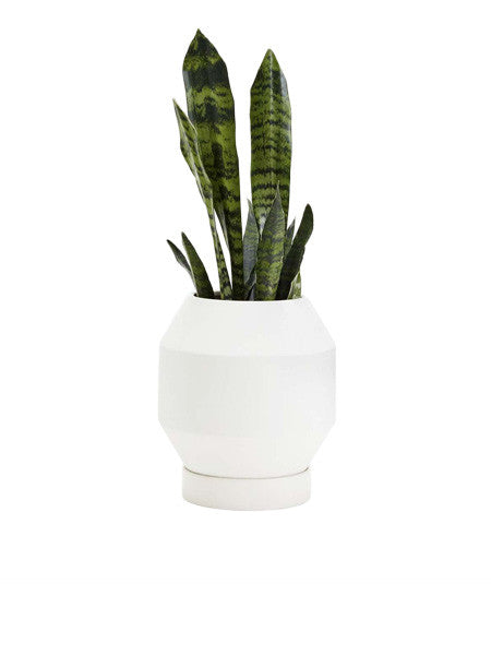 Areaware - Radial Vessel / Planter