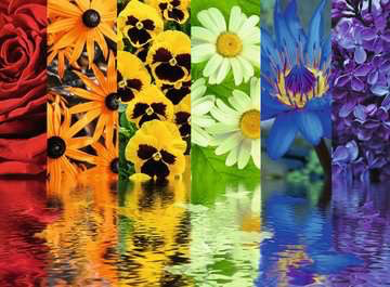 Ravensburger 500PCS Floral Reflections